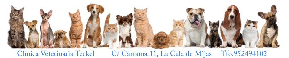 clinica veterinaria teckel
